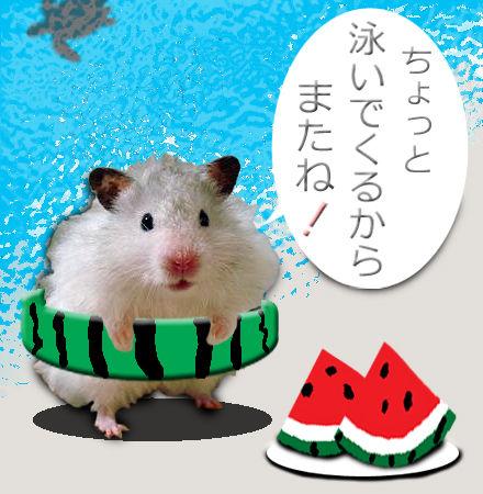 銀太の夏休み